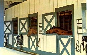 KY - Lexington. Kentucky Horse Park