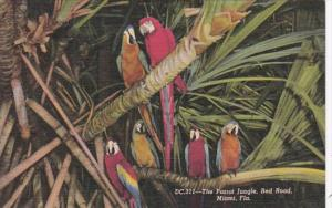 Florida Miami Colorful Macaws Parrot Jungle Red Road Curteich