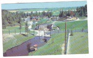 Section Des Ruminants, Zoo De St-Felicien, Lac St-Jean, Quebec, Canada, 1940-...