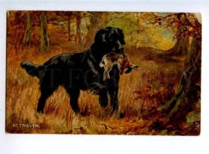156482 Hare HUNT Dog RETRIEVER by DRUMMOND vintage TUCK PC