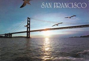 California San Francisco Seagulls And The Golden Gate Bridge