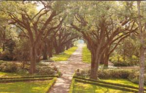 Louisiana St Francisville Rosedown Plantation and Gardens The Avenue Of Oaks