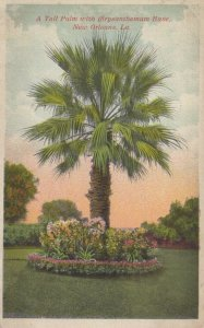 NEW ORLEANS, Louisiana, 00-10s; Tall Palm with Chysanthemum Base