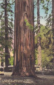 Giant Redwood Trees Lane's Redwood Flat On Redwood Highway California Handcol...