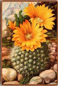 BARREL CACTUS IN BLOOM - FLOWER - VINTAGE POSTCARD