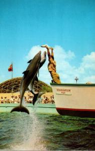 Florida Miami Seaquarium Jumping Porpoise 1963