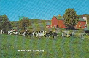 Dairy Cow herd , ST-ANACLET , Rimouski , Quebec, Canada , PU-1975