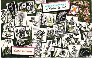 Wildflowers of Nova Scotia, Cape Breton