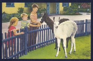 Children & Llamas Belle Isle Zoo unused c1940's