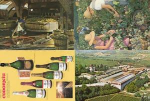 Cavas Codorniu Ladies Making Spain Wine Bottles 4x Spanish Postcard s