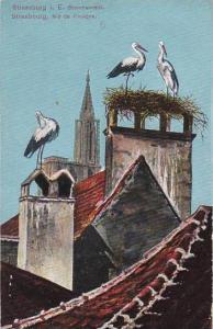 France Strasbourg Nid De Cigignes Storks