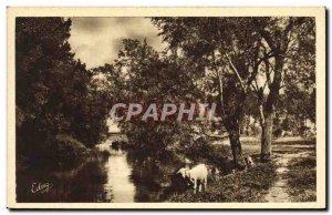 Old Postcard Chevre Argenteuil