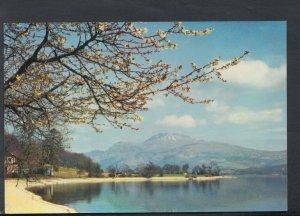Scotland Postcard - Loch Lomond & Ben Lomond From Luss    RR4796