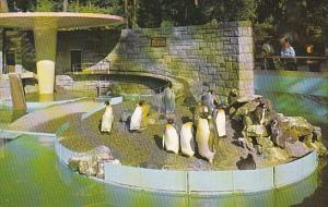 Canada British Columbia Vancouver Penguins In Stanley Park
