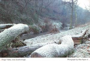 Postcard Forge Valley, near Scarborough, Winter Landscape Woodland, Snow #S