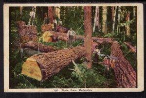 Timber Scene,Washington BIN