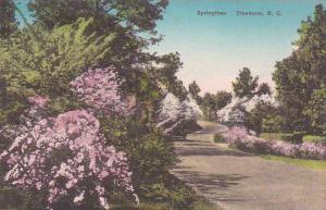 North Carolina Pinehurst Springtime Albertype