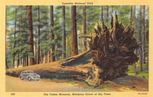 Yosemite National Park California 1940s Postcard Fallen Monarch Mariposa Grove