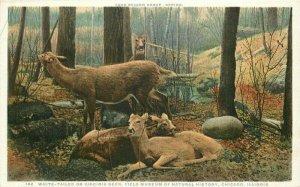 Chicago Illinois Virginia Deer white Detroit Publishing C-1910 Postcard 21-6168