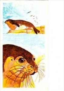 Brooke Bond Tea Trade Card Vanishing Wildlife No 2 Mediterranean Monk Seal