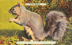USA Linen Postcard, A Nut Cracker, Squirrel EZ3