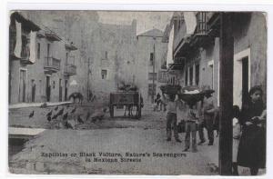 Zapilotes Black Vultures Street Scavengers Mexico 1910c postcard