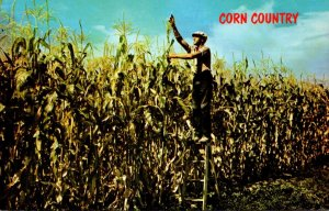 Illinois Corn Country Where The Corn Grows Tall