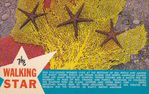 The Walking Star Fish