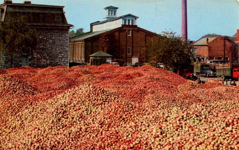 WV - Martinsburg. A Million Bushels of Apples