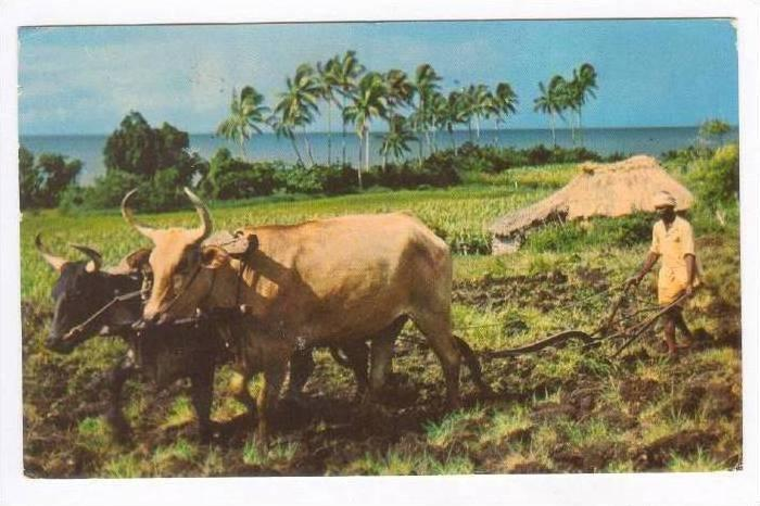 Farming, Indian Ploughman, Fiji, 50-60s