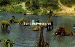 thailand, CHIENGMAI, Working Elephants taking a Bath at Camp (1977)