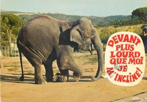 Animal humor funny Postcard Elephant taking a bow