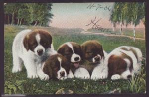 Saint Bernard,Puppies Postcard