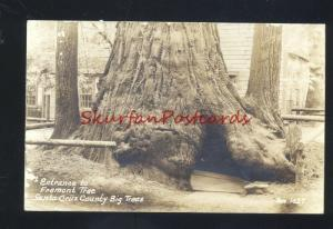 RPPC SANTA CRUZ COUNTY BIG TREES CALIFORNIA FREMONT DRIVE THRU TREE POSTCARD