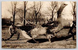 RPPC Takes Three to Drag This Exaggerated Goose to Market~Closeup Photo 1910 PC
