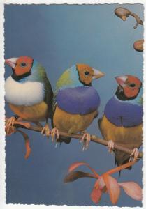 Birds topic postcard oiseaux 2scans