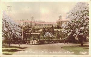 South Africa Union Buildings Pretoria Jacarandas in Bloom 01.94