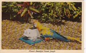 Florida Miami Benino The Performing Macaw Parrot Jungle Red Road 1963