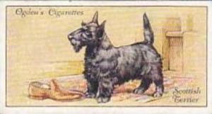 Ogdens Vintage Cigarette Card No 44 Scottish Terrier  1936