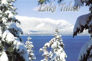 Postcard Snow Covered Trees, Lake Tahoe, Nevada, California, USA, J48