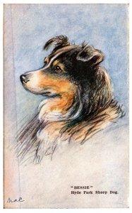 Dog , Hyde park Sheep Dog   ,   artist Signed Mac