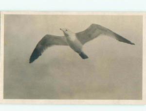 Old rppc ANIMAL SCENE Great Postcard AB2003