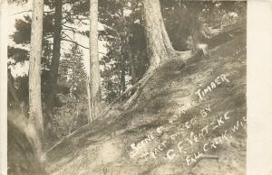 Fall Creek Wisconsin~CF Ventzke~40 Acre Timber Tract~1920s Real Photo Postcard