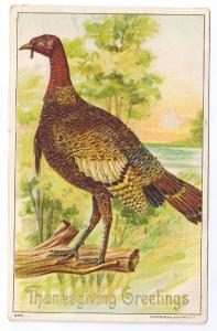 1908 Embossed Thanksgiving Postcard Julius Bien 9001 Wild Turkey Vintage