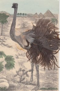 Ostrich , real feathers , 00-10s