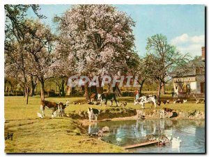 Modern Postcard Normandy THE trough