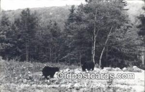 Keweenaw Park, Michigan USA Bear Postcard, Bear Post Card Old Vintage Antique...