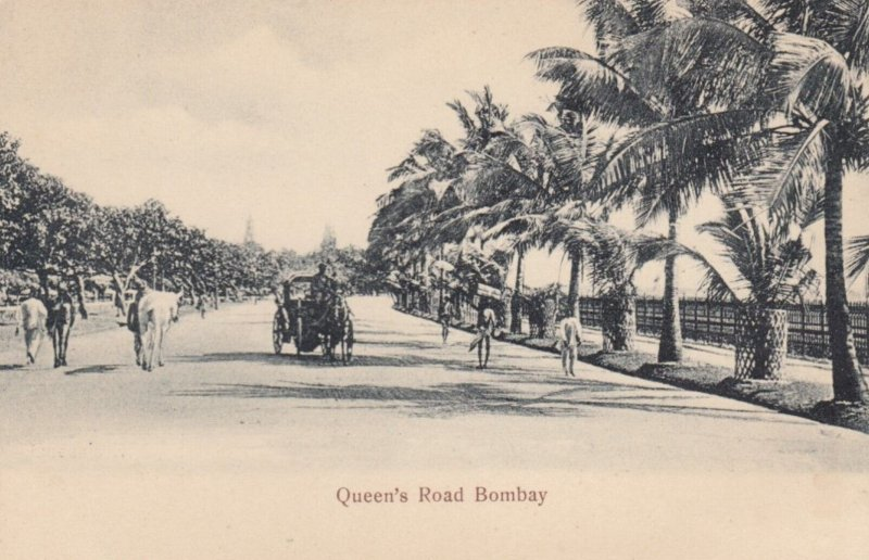 BOMBAY, India, 1900-10s; Palm Tree Lined, Queen's Road
