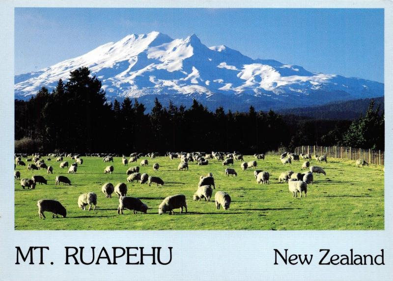 Postcard Mount Ruapehu with Sheep in the Foreground, New Zealand G4