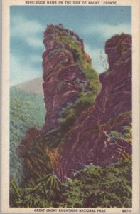 SMOKEY MOUNTAINS - DUCK HAWK ON THE SIDE OF MOUNT LECONTE, 1930/40s